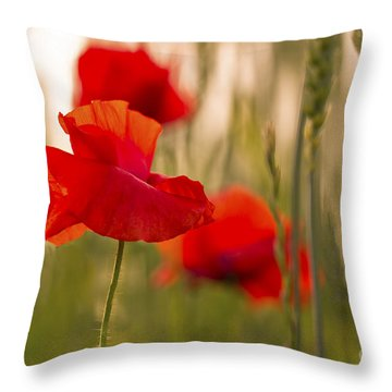 Sunset Poppies. Throw Pillow by Clare Bambers