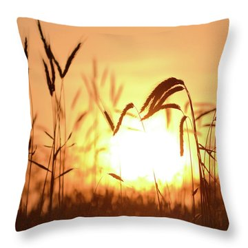 Sunset Rye IIi Throw Pillow