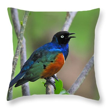 Superb Starling Throw Pillow by Tony Beck