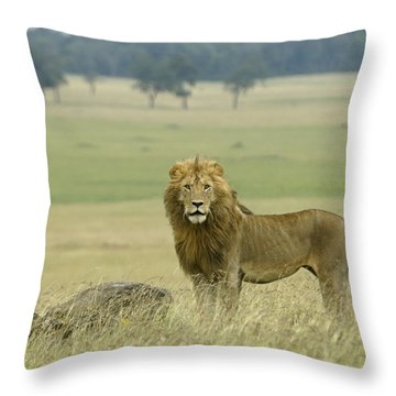 Surveying His Kingdom Throw Pillow by Michele Burgess