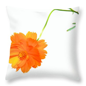 Throw Pillow featuring the photograph Suspended by Rosalie Scanlon