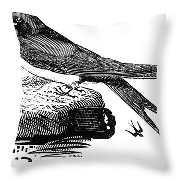 Swallow, C1800 Throw Pillow by Granger
