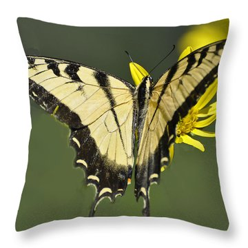 Swallowtail And Friend Throw Pillow