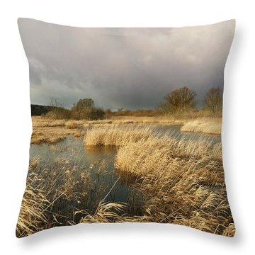 Swampland Throw Pillow by Robert Lacy