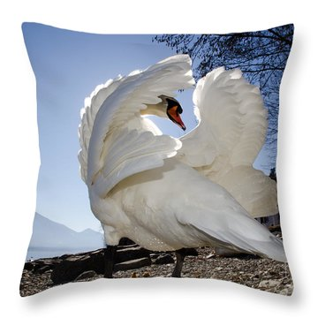 Swan In Backlight Throw Pillow
