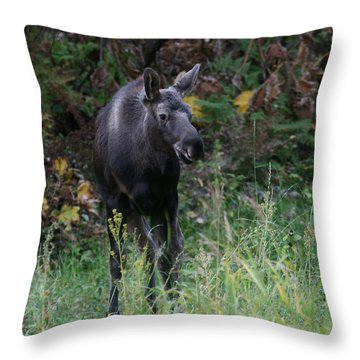 Throw Pillow featuring the photograph Sweet Face by Doug Lloyd