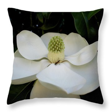Throw Pillow featuring the photograph Sweet Magnolia by Paul Mashburn
