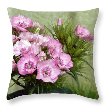 Sweet Sweet Williams Throw Pillow by Pamela Patch