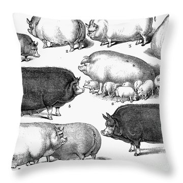 Swine, 1876 Throw Pillow by Granger