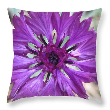 Throw Pillow featuring the photograph Symetrically Sane by Tina Marie