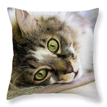 Tabby Cat Looking At Camera Throw Pillow