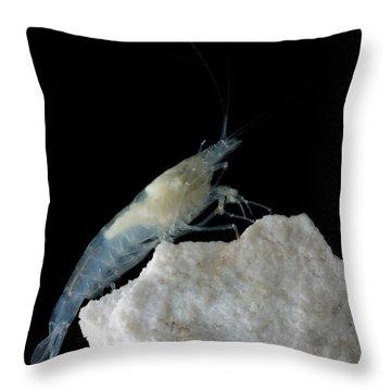 Taiji Cave Shrimp Throw Pillow
