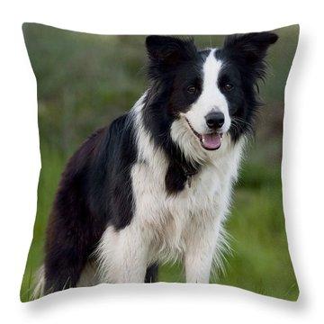 Taj - Border Collie Throw Pillow by Michelle Wrighton