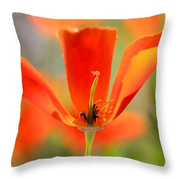 Take A Look Inside Throw Pillow by Heidi Smith