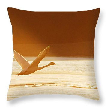 Takeoff At Sunset Throw Pillow by Larry Ricker
