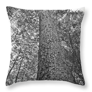 Throw Pillow featuring the photograph Tall Tree With Sunshine by Susan Leggett