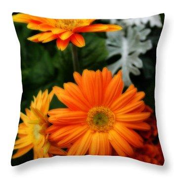 Tangerine Colored Gerbera Daisies Throw Pillow by Kay Novy