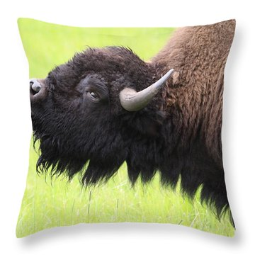 Tatanka Throw Pillow