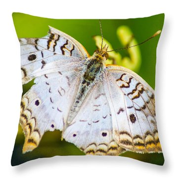 Throw Pillow featuring the photograph Tattered Moth by Shannon Harrington