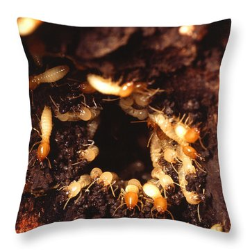 Termite Nest Throw Pillow by Science Source