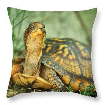 Terrapene Carolina Eastern Box Turtle Throw Pillow