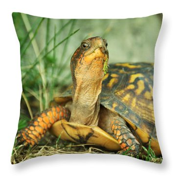 Terrapene Carolina Eastern Box Turtle Throw Pillow by Rebecca Sherman
