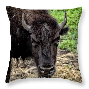 The Bison Stare Throw Pillow by Karol Livote