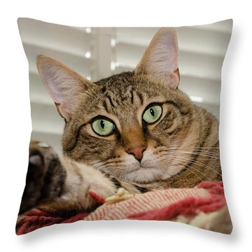 The Cat With Green Eyes Throw Pillow