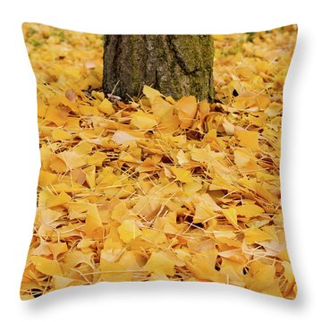 Throw Pillow featuring the photograph The Fall Of Ginkgo by Rachel Cohen