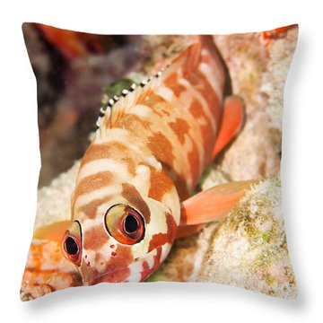 The Hawkfish Throw Pillow by MotHaiBaPhoto Prints