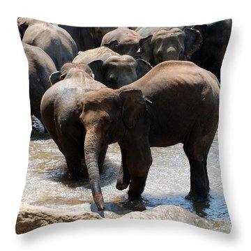 Throw Pillow featuring the photograph The Hurt Elephant by Pravine Chester
