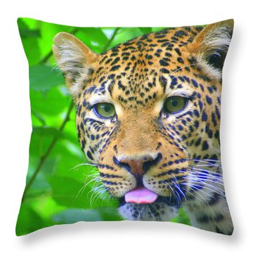 The Leopard's Tongue Throw Pillow by Laurel Talabere
