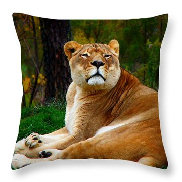 The Lioness Throw Pillow by Davandra Cribbie