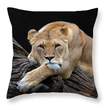The Lioness Is Watching You Throw Pillow by Eva Kaufman