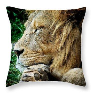 The Lions Sleeps Throw Pillow