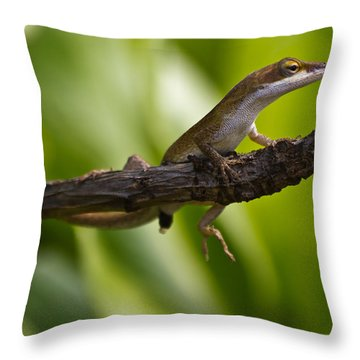 The Lookout Throw Pillow by Roger Mullenhour