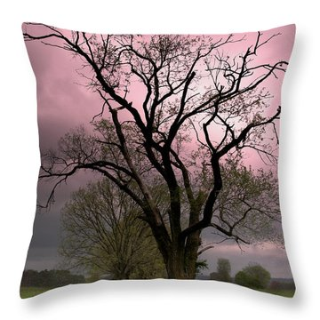 The Old Tree Throw Pillow by Brian Stamm