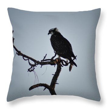 The Osprey Throw Pillow by Bill Cannon