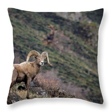 Throw Pillow featuring the photograph The Overlook by Steve McKinzie