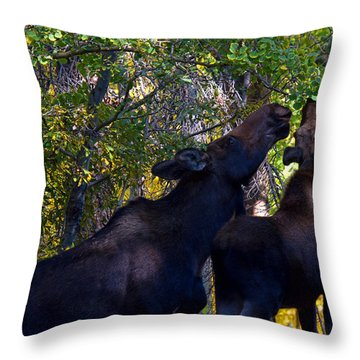 The Picnic In The Park Throw Pillow by Jim Garrison