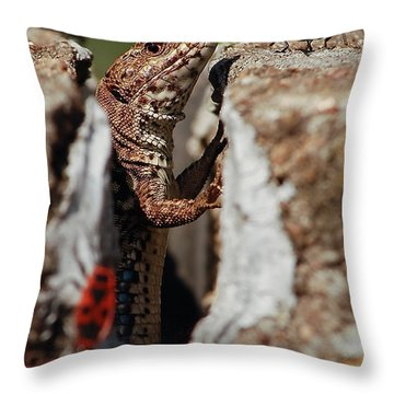 Throw Pillow featuring the photograph the random Lizard  by Stwayne Keubrick