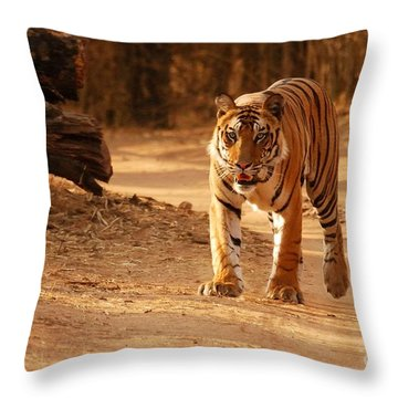 The Royal Bengal Tiger Throw Pillow by Fotosas Photography