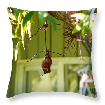 The Sleeping Hummingbird Throw Pillow by Gail Bridger