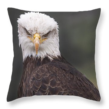 The Stare Throw Pillow by Eunice Gibb