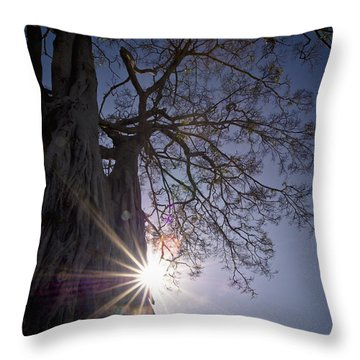 The Sunlight Shines Behind A Tree Trunk Throw Pillow by David DuChemin