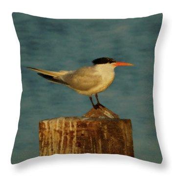 The Tern Throw Pillow by Ernie Echols