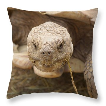 The Tortoise  Throw Pillow by J Jaiam