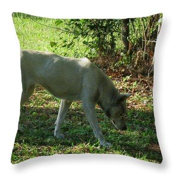 The Tracker Throw Pillow by Maria Urso