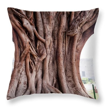 Throw Pillow featuring the photograph The Twisted And Gnarled Stump And Stem Of A Large Tree Inside The Qutub Minar Compound by Ashish Agarwal