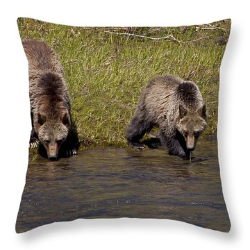 Throw Pillow featuring the photograph Thirsty Grizzlies by J L Woody Wooden